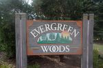 Evergreen Woods