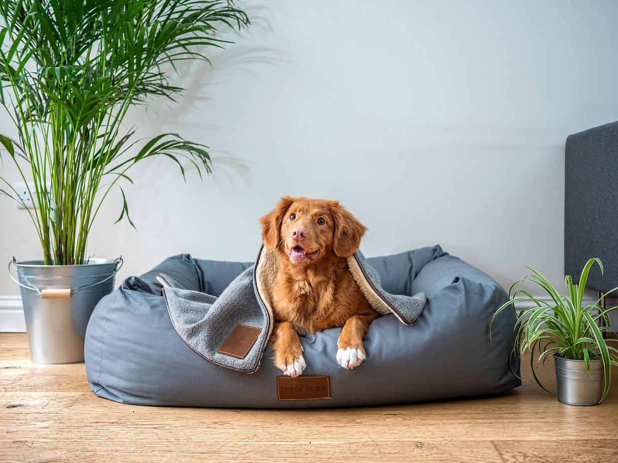 Modifying Your Home For Senior Pets